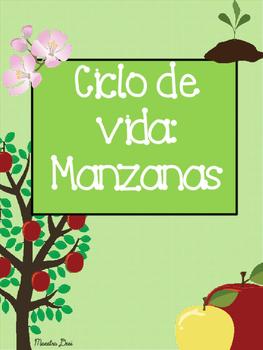 Apple Life Cycle / Ciclo de Vida de la Manzana