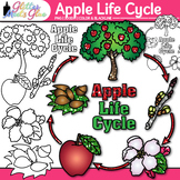Apple Life Cycle Clip Art | Autumn & Fall Plant Graphics for Science Activities