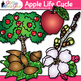 Apple Life Cycle Clip Art   Autumn & Fall Plant Graphics for Science Activities