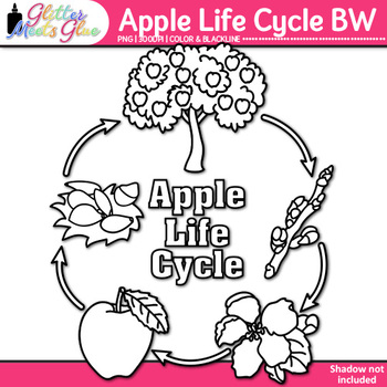 Apple Life Cycle Clip Art {Autumn Plant Graphics for Science Activities} B&W