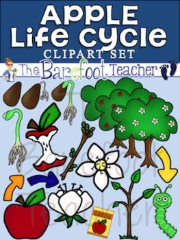 Apple Life Cycle Clip Art