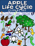Apple Life Cycle Clip Art