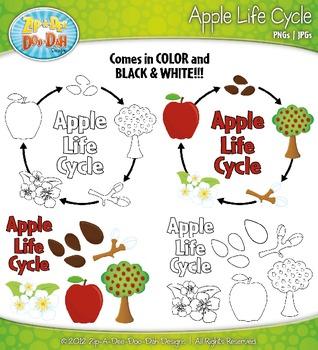 Apple Life Cycle Clipart {Zip-A-Dee-Doo-Dah Designs}