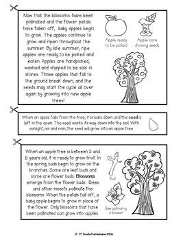 Apple Life Cycle FLIP Book