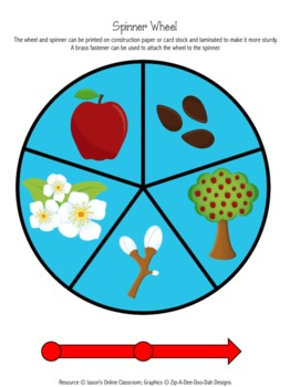 Apple Life Cycle Graphing Activity