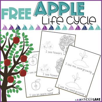 Apple Life Cycle - Mini Book