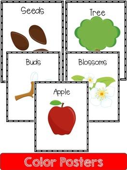 Apple  Life Cycle: Mini Unit