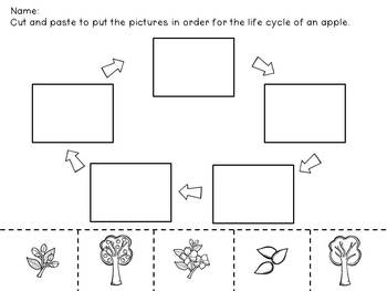 Apple Life Cycle Mini Unit by Mrs Lindsey | Teachers Pay ...