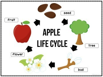 Apple Life Cycle Mini Unit - Sequencing Practice
