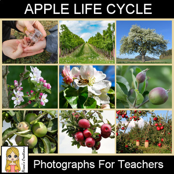 Apple Life Cycle Photograph Pack