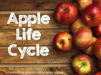 Apple Life Cycle PowerPoint with Photographs