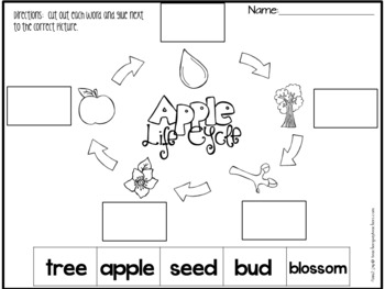 Apple Life Cycle - Printable Reading and Writing Center Activities