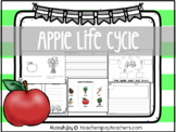 Apple Life Cycle - Printable Reading and Writing Center Ac