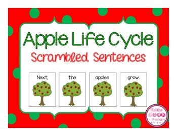 Apple Life Cycle Scrambled Sentences