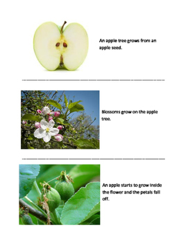 Apple Life Cycle Sequencing