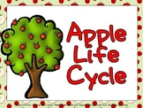 Apple Life Cycle Shared Reading PowerPoint- Kindergarten
