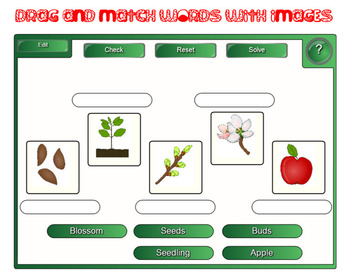 Apple's Life Cycle - SmartBord activities
