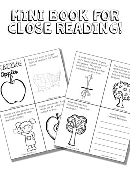 Apples   Apple Life Cycle   Apples Close Read Unit