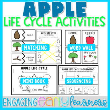 Apple Life Cycle - Word Wall and Activities