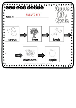 Apple Life Cycle Worksheets | Cut and Paste