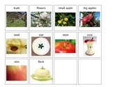 Apple Life Cycle and Parts