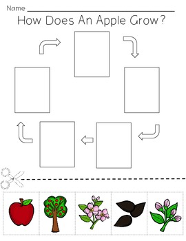 Apple Lifecycle