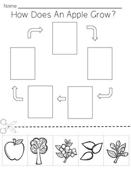 Apple tree life cycle sequencing activity worksheet by Little Blue ...