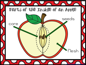 Apple Mini lesson and Center Ideas