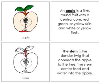 Apple Nomenclature Book (Red)
