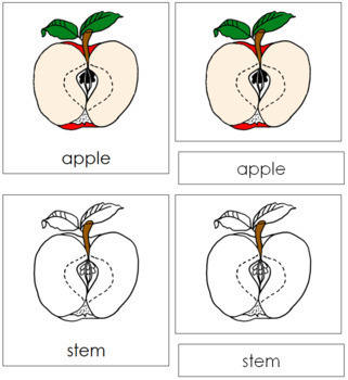 Apple Nomenclature Cards