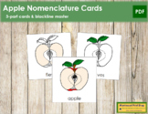 Apple Nomenclature Cards