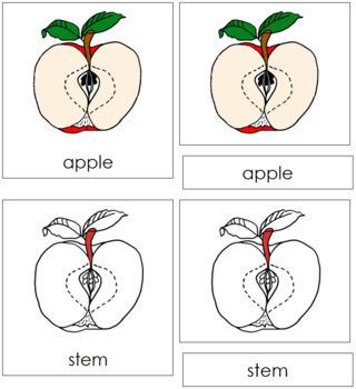 Apple Nomenclature Cards (Red)