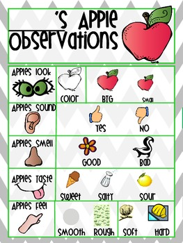 Apple Observation Worksheet