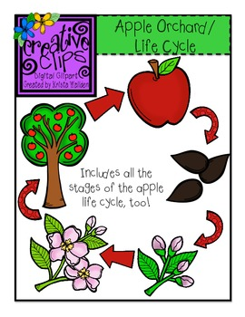 Apple Orchard and Apple Life Cycle Bundle {Creative Clips Digital Clipart}