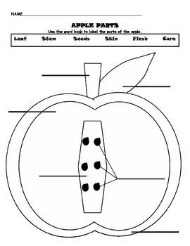 Apple Parts Labeling Worksheet