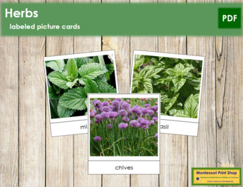 Herb Picture Cards