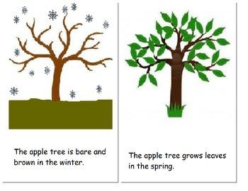 Apple Pie Tree (Zoe Hall) sequencing