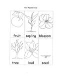 Apple Printable Worksheets Life Cycle Seasons Parts of Apple