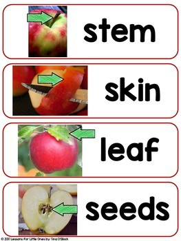 Apple Science & STEM, Parts of an Apple Word Wall Cards & Apple Craftivities