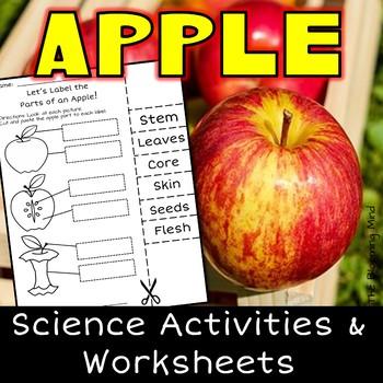 Apple Science Worksheets {No Prep}