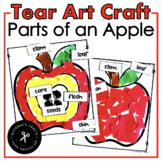 Tear Art - Parts of an Apple