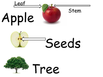 Apple Theme Vocabulary