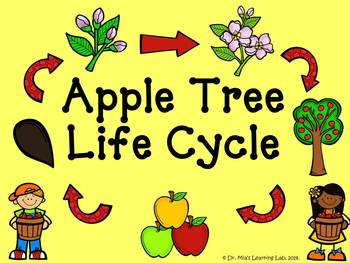 Apple Tree Life Cycle Book (a book about the for early/emergent readers)