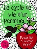 Apple Tree Life Cycle ~ French ~ Le cycle de vie d'un pommier