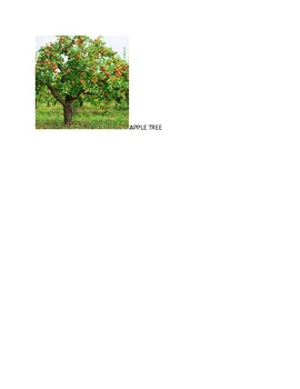 Speech Therapy-Special Education-Apple/Tree Vocabulary