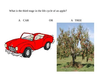 Apple Unit Quiz