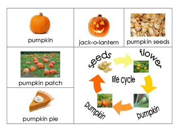Fall and related Vocabulary Words
