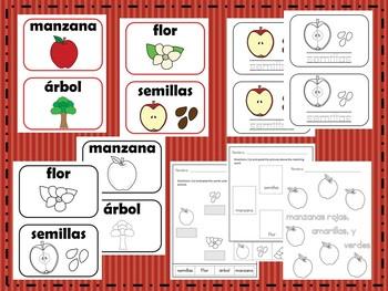 Apple Vocabulary in Spanish