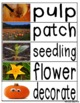 Pumpkin Word Cards