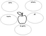 Apple graphic organizer using the 5 senses in spanish